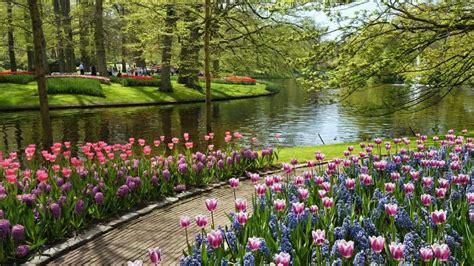 gambar kartun taman bunga gambar pemandangan gambar