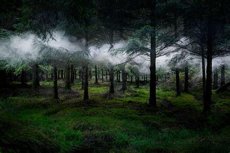 imagenes hdri para keyshot artist has spent 7 years turning uk forests into works of