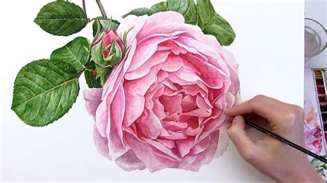 rose can how to paint a rose flower in watercolour anna mason art