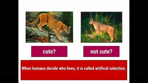 what is natural section evolution 1 natural selection vs artificial selection