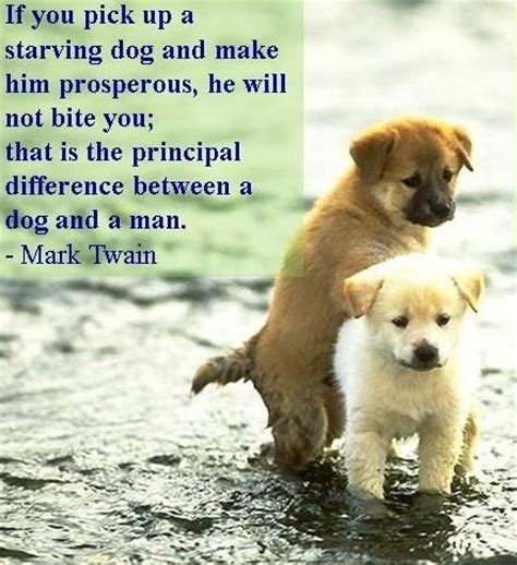 unconditional dog love quotes weneedfun