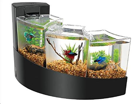 Unique and Cool Betta Fish Tanks My Dog Ate My Money