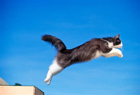 How To Stop A Cat From Jumping On Furniture by 187 Fabulous Jumping Cats Will Make You Go Meow