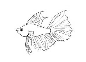 Betta Fish Coloring Pagesjpg sketch template