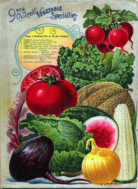 garden fruits and vegetables s a 125 best seed catalog illustrations images on