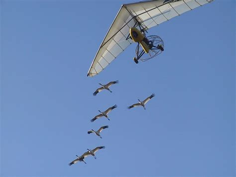 whooping crane resources to explore