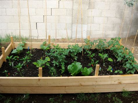 large container vegetable gardening photo of vegetable garden in big container png hi res 720p hd
