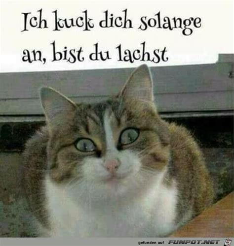 Katzen Meme - die besten 20 lustige katzen ideen auf pinterest