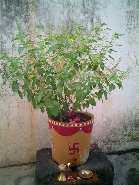 tulasi pooja  home pot painted   happy