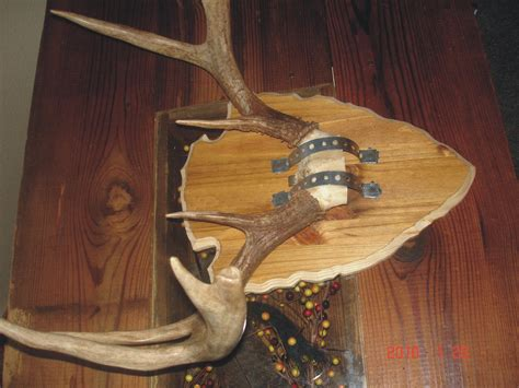 deer antler plaque template