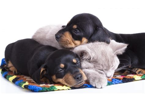 when should puppies get pet vaccinations animal hospital in jacksonville