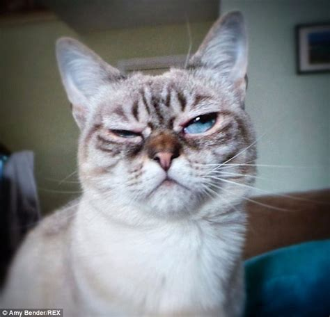 Frown Cat Meme - grumpy cat has a rival in sauerkraut the moggy with a