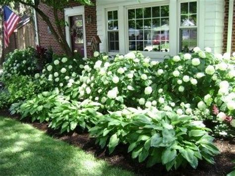 for a low maintenance yet 25 best ideas about low maintenance landscaping on