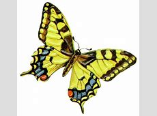 Yellow Butterfly Clipart   Clipart library - Free Clipart ... Free Clipart Downloads Butterflies