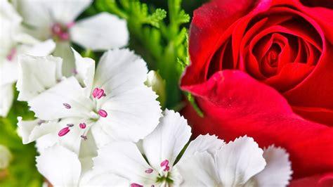wallpaper flower download hd hd wallpapers download flowers hd wallpapers download 1080p
