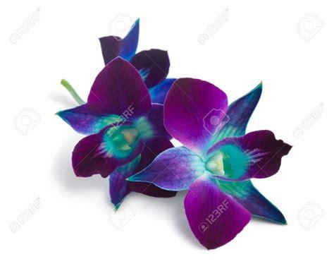 blue orchid purple and blue orchid flowers www pixshark com images
