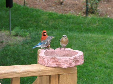 raywood landscape tips to help our feathered friends in