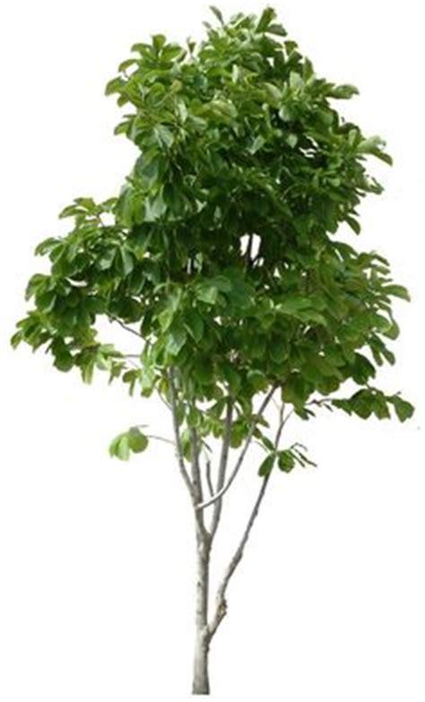 20 livre 193 rvore png imagens artocarpus heterophyllus02l