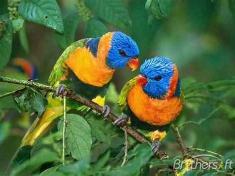 download free bright birds free screensaver bright birds