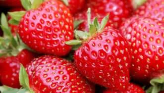 la fraise d 233 lice 224 gauche de la meuse la bonne cuisine