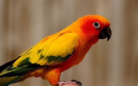 Orange Car Color Names by Picture Orange Yellow Parrot