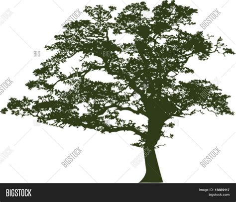 vector of an oak tree silhouette stock vector amp stock