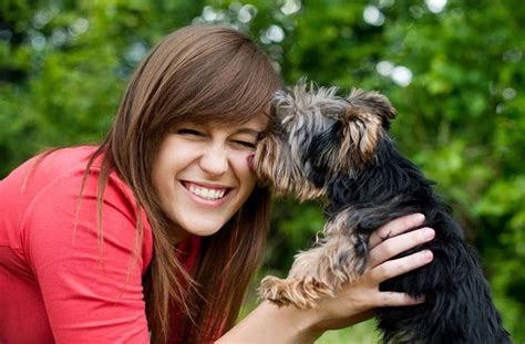 can dogs tell when your can dogs tell if someone is untrustworthy american kennel club