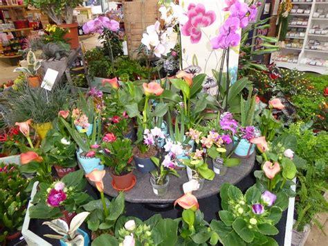 houseplants bawdeswell garden centre