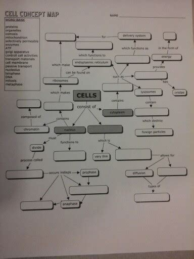 cell concept map answers solved cell concept map in the form of which makes cells