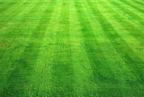 bowling green grass background age landscaping
