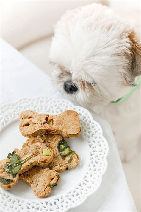 is spinach for dogs friendly st s brunch the menu diy for dogs spinach and
