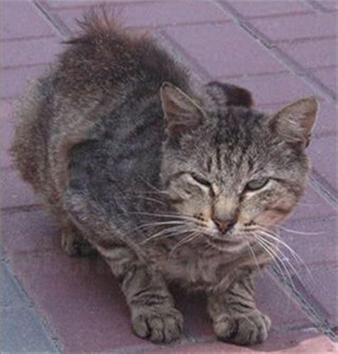 who do i call to up a stray helping stray cats