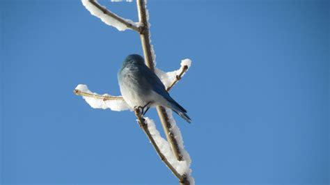backyard bird feeding in albuquerque rio rancho move