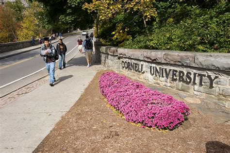 Cornell Mba Acceptance Rate 2016 by Cornell Sat Scores Acceptance Rate More