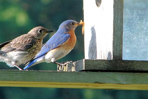 Detox Auglaize County by Photo Gallery Ohio Blue Bird Society