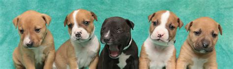where can i adopt a puppy near me humane society silicon valley home autos post