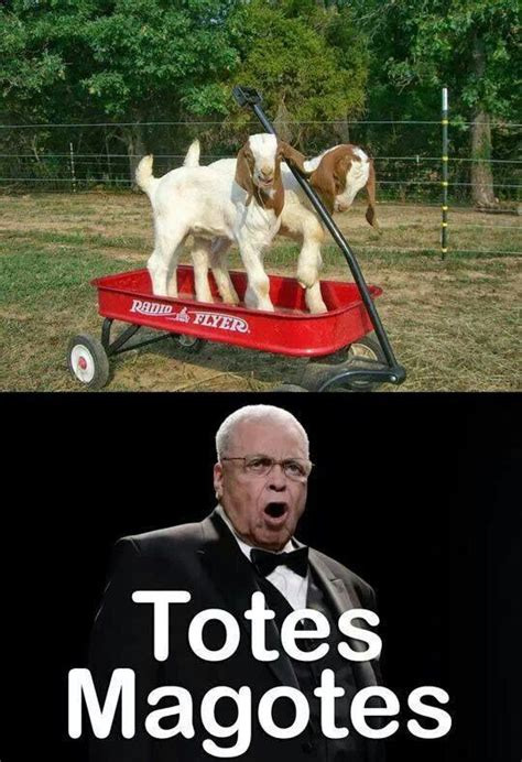 Totes Magotes Meme - totes my goats humerous pinterest