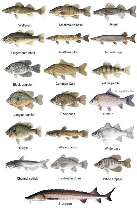 fishing names fish types names of fish 2017 fish tank maintenance