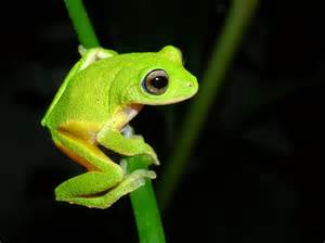 colorful frogs colorful hibians wallpapers gallery