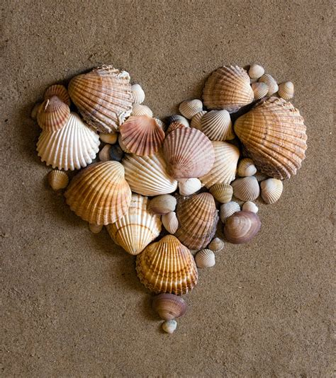 splendid design decorating with sea shells