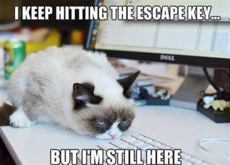 How To Make A Grumpy Cat Meme - best grumpy cat memes that you ll ever see