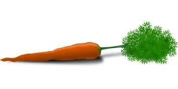 is a carrot a root vegetable carrot root vegetable vector free psd vector icons