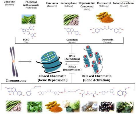 epigenetica e alimentazione il cibo la genetica e il karma la valdichiana