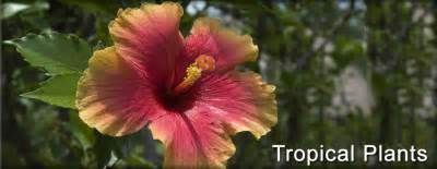 what plants live in tropical rainforest tropical plants