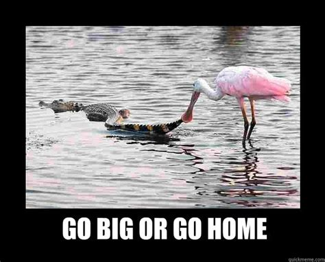 go big or go home part 2 of 2 buckeye bats the