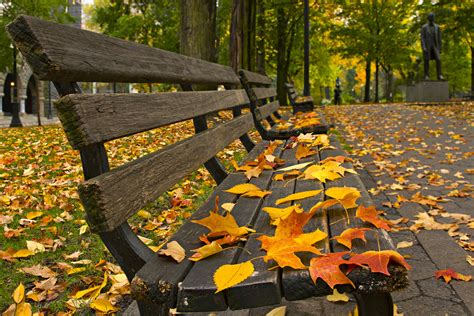 autumn park bench autumn photography tips capturing the season of changing