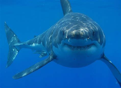 orange shark fewer sharks off ala coast warning dropped alabama