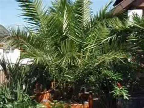 palme österreich palmen in 214 sterreich teil 1