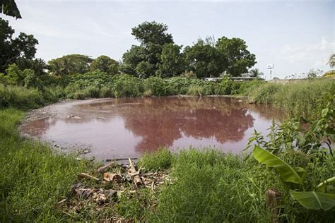 horror of mexican lagoon turned by slaughtered pigs