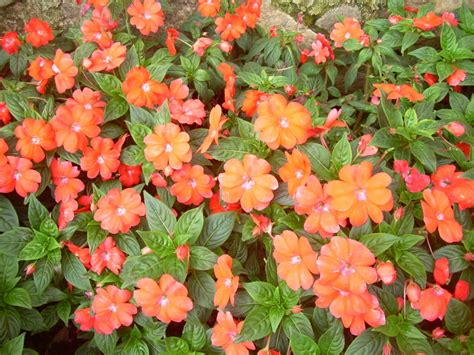 Plants In House Flower Garden Munnar Kerala Plant Amp Nature Photos Sv